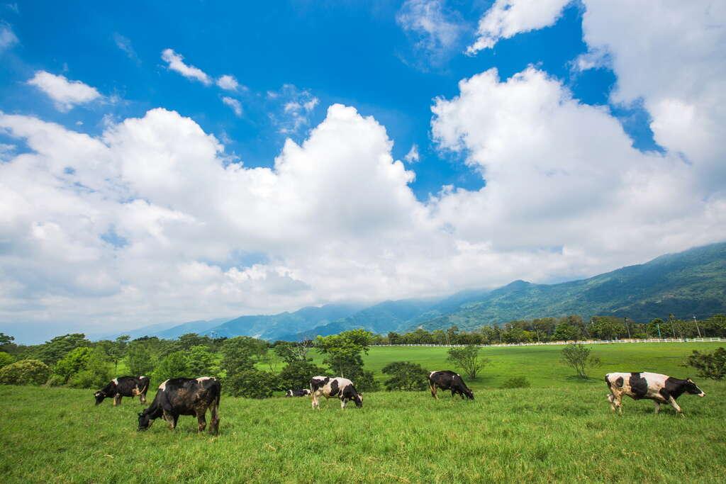 一望無際的綠油油牧草地,幾隻乳牛點綴其間
